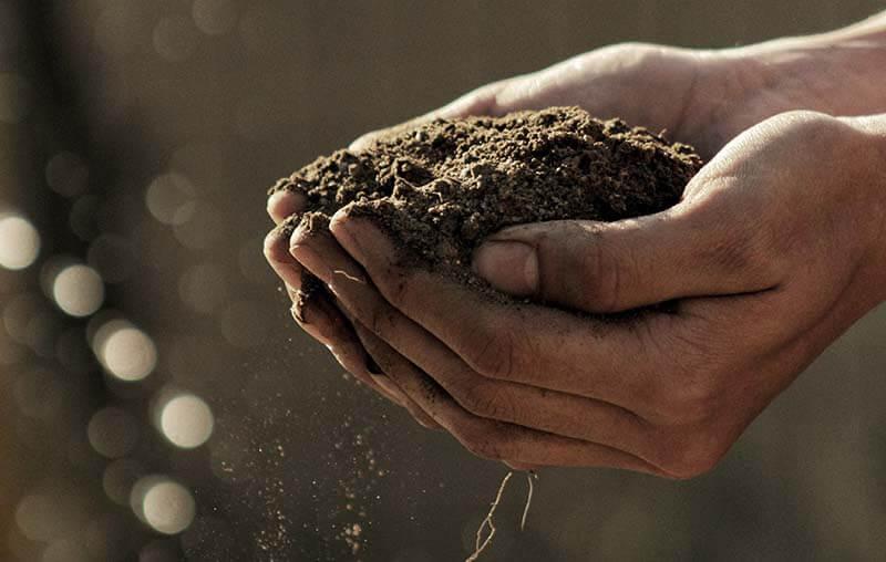 L'agricoltura biologica produzione bio saporelite