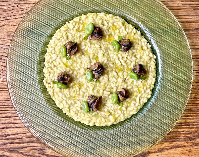 Ricetta deliziosa risotto con crema di fave fresche menta e lumache saporelite